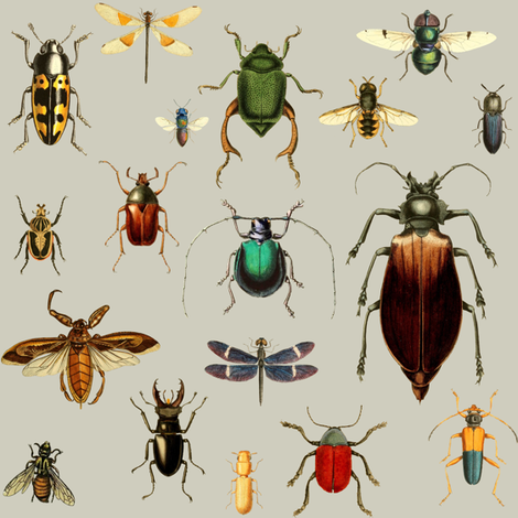 BUGS COLLECTION / VINTAGE / TAN fabric by shopcabin on Spoonflower - custom fabric