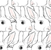 Rrwhite_rabbits_shop_thumb