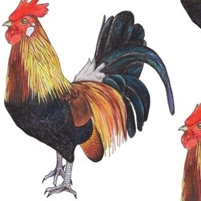 Rooster - large scale