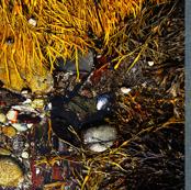 Maine Sea Shore Shells Tea Towel