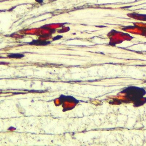 Thin section / cream and ruby minerals
