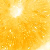 Snowcatcher Lemon