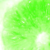 Snowcatcher Lime