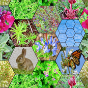 California butterfly garden hexagons