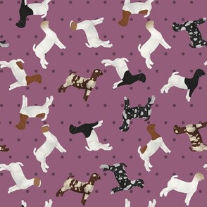 Polka Dot Boer Goat - Purple