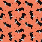 Polka Dot Belted Pig - Coral