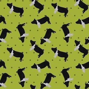 Polka Dot Belted Pig - Lime