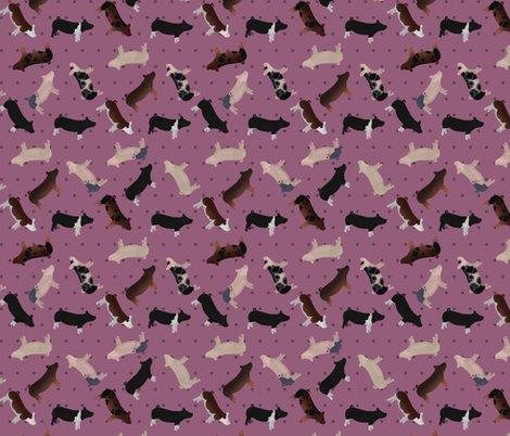 Pig_mixed_breed_lilac_polkadot_shop_preview