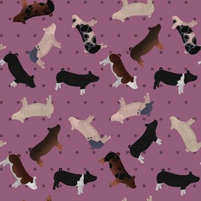 Polka Dot Belted Pig - Purple