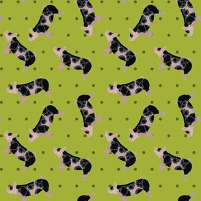 Polka Dot Spotted Pig - Lime
