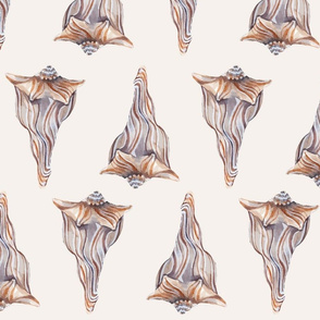 Simple Conches
