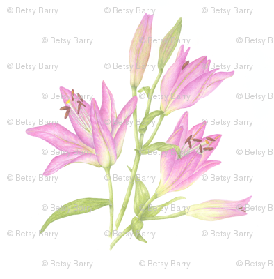 Pink lily small print