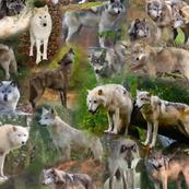 Wolf Mee