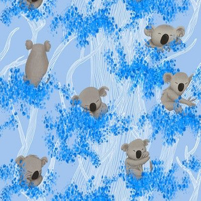 Sleeping Koala Bears on blue Eucalyptus Trees and Background