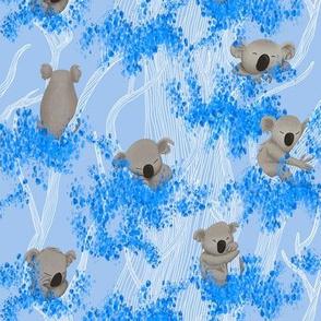 Sleeping Koala Bears on blue Eucalyptus Trees and Background