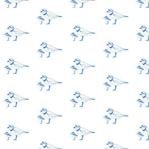 Ultramarine Plover