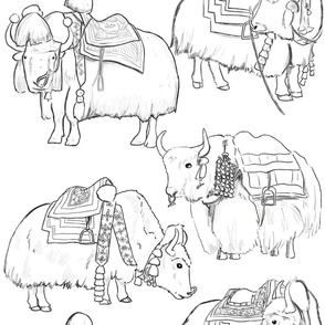 Tibetan Yaks in Black and White