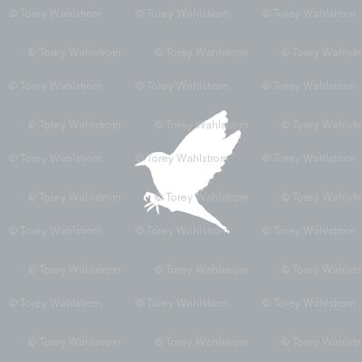 Steel Grey Warbler