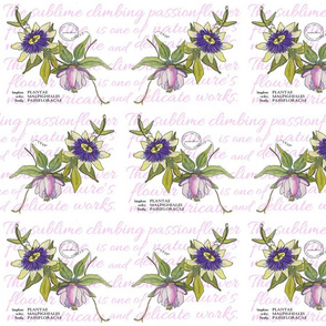 Passionflower Repeat