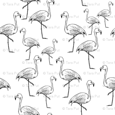 Black and White Flamingos - Larger Size