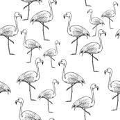 Flamingos_black_and_white_shop_thumb