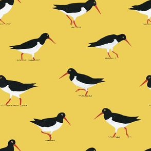 Oystercatcher Pattern