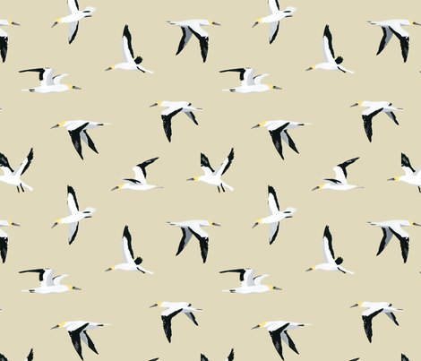 Gannet_pattern_shop_preview