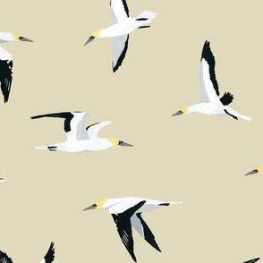 Gannet Pattern