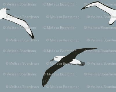 Flying Albatross Pattern