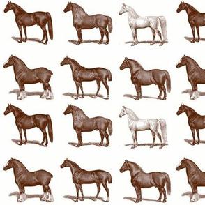 Horses in Brown