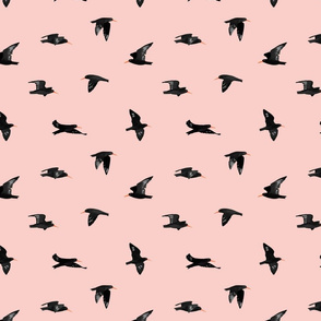 Flying Oystercatcher Pattern