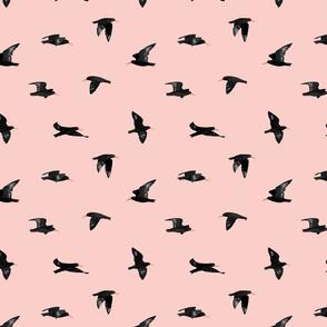 Flying Oystercatcher Pattern