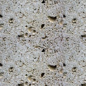 Cordova Shell Limestone