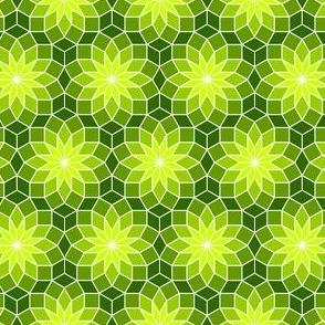06245562 : SC3 V234R : verdant