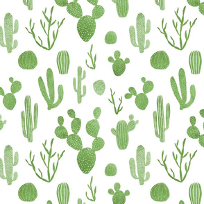 Green cacti on white