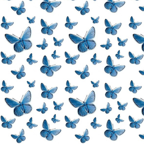 blue butterfly flight