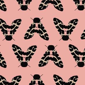 Muted Moth