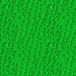 Green-Eft (newt)
