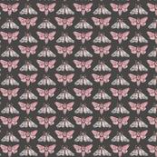 Moths w Dark Gray