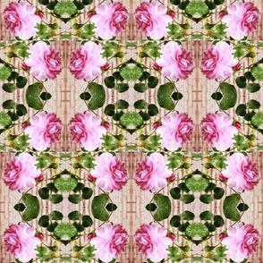 Pink Rose Reverie