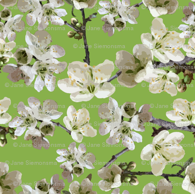 Almond Blossoms and Green