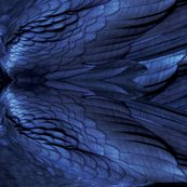 Rraven_feathers_shop_thumb