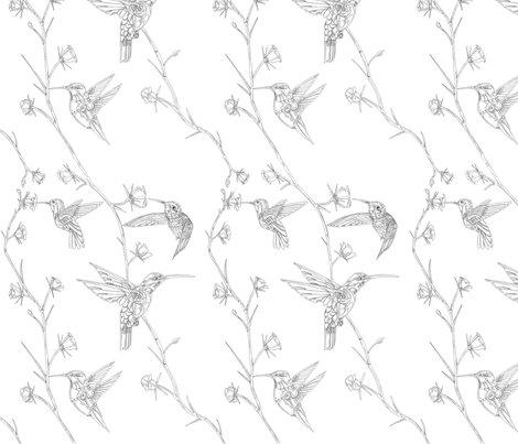 Rrhummingbirds_redone_shop_preview
