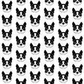 Rboston-terrier-single_shop_thumb