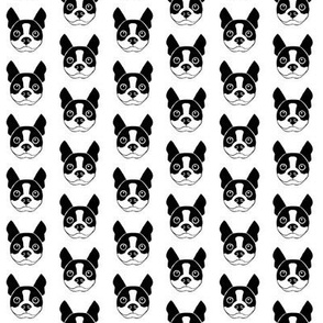 tiny boston-terrier-faces