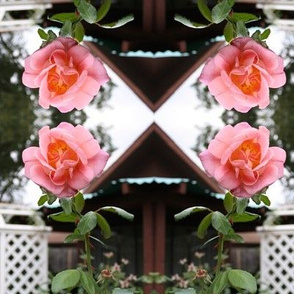 Trellised Pink Roses Reflected, XL