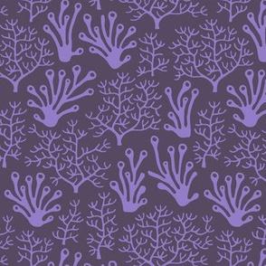 Coral reef purple