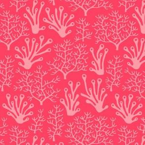 Coral reef hot pink