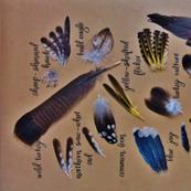 Birds of Pelee Island