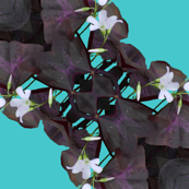Oxalis Garland Trellis in purple and turquoise